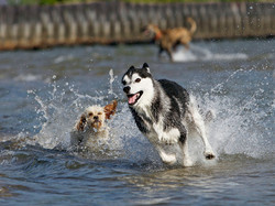 8 Best Dog-Friendly Beaches in USA