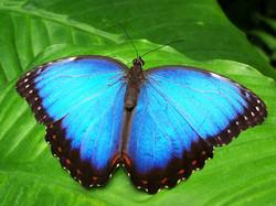 South America's Fascinating Fauna
