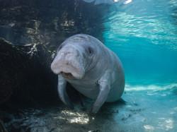 Where to Experience Florida Wildlife