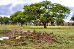 Serengeti Savvy