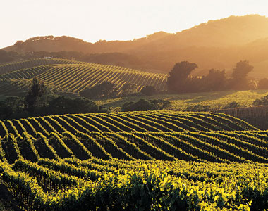36 Hours in Sonoma