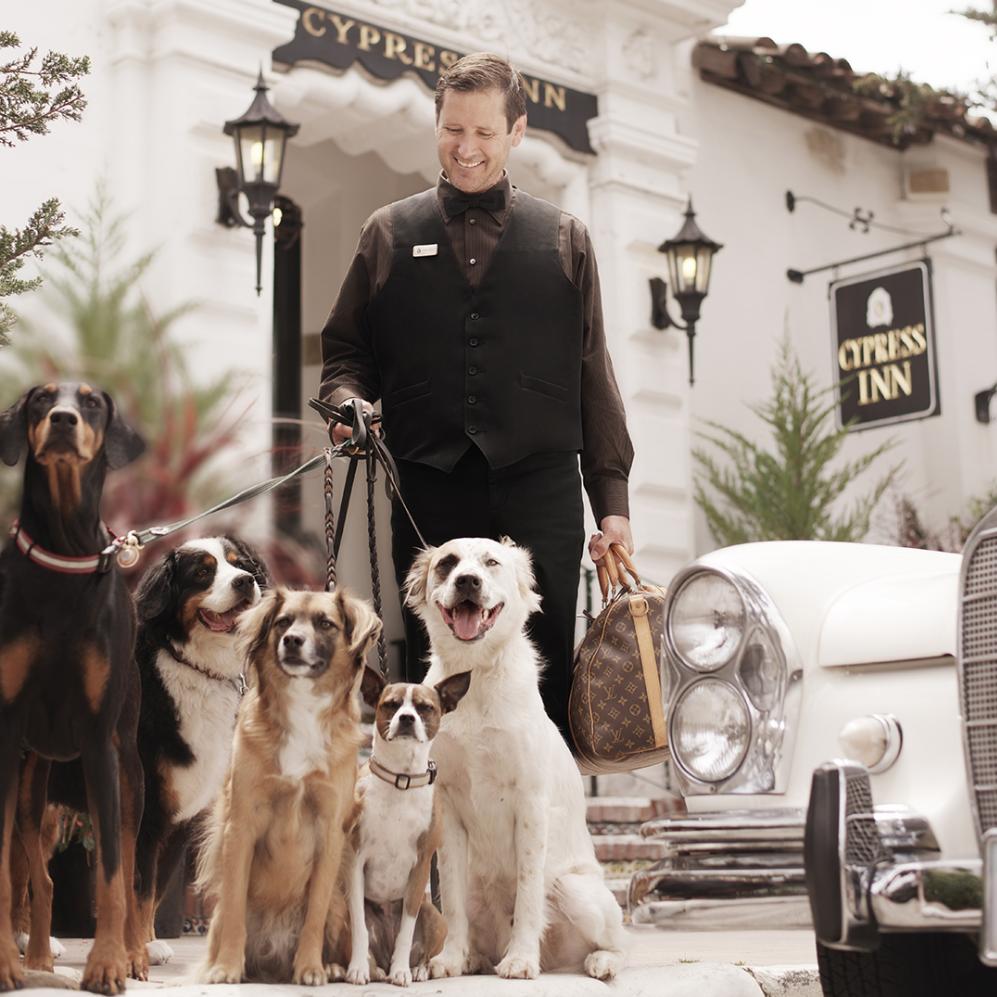 Top 10 Pet-friendly Hotels