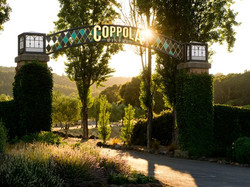 Wine Country Loyalty Programs