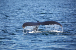 A Weekend with Cape Cod's Whales