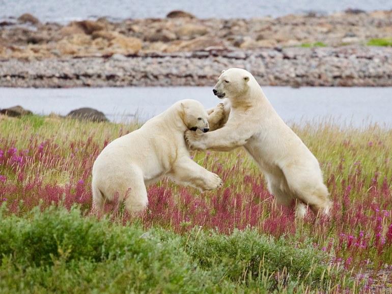Polar Trailblazer
