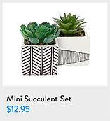 mini_succulent.jpg
