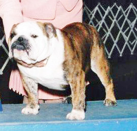 AKC Champion Exact Classic HiStand's The