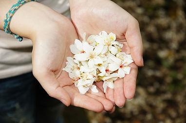 tung-flowers-468005_960_720.jpg