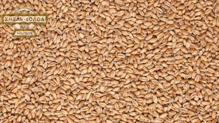 Солод ШАТО ВИТ БЛАН пшеничный, Chateau Wheat Blanc, 5,5 ЕВС