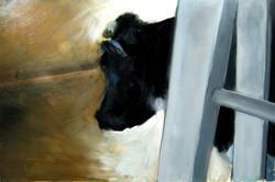 A very sad cow
