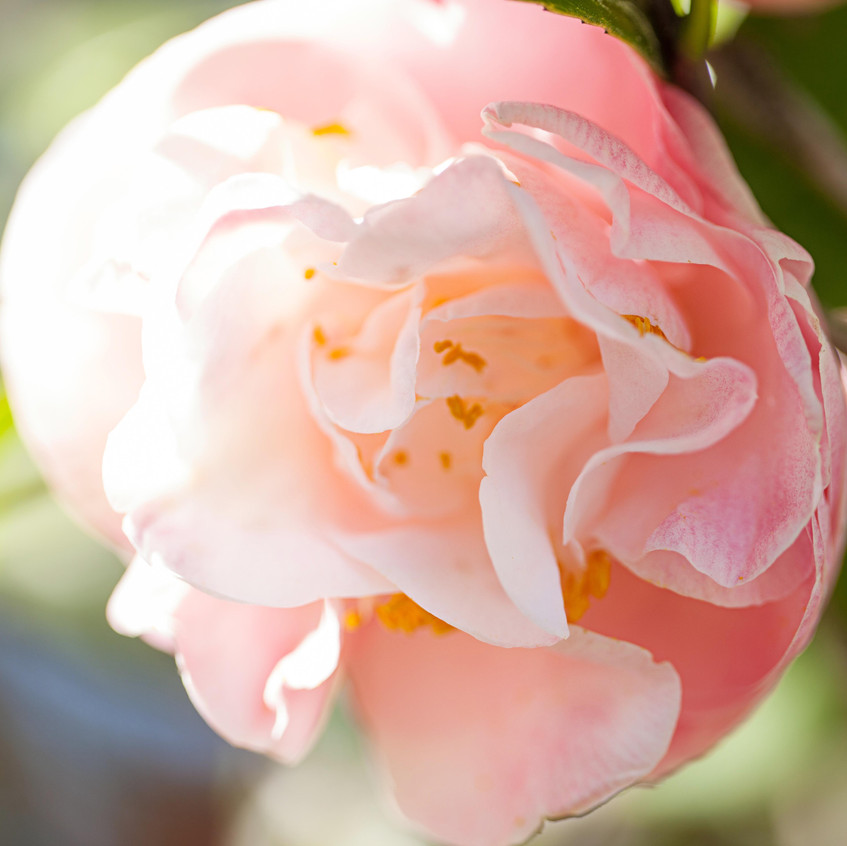 Charleston, SC: Magnolia Plantation