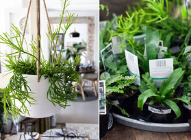 10 OF THE BEST INDOOR PLANTS FOR YOUR HOME
