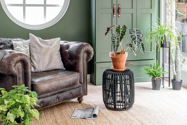 Our guide to creating an urban jungle inside your own home