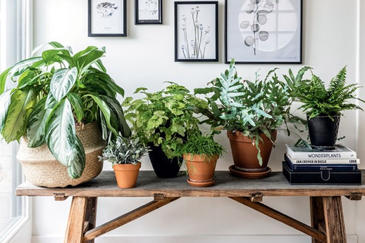 Room Recipe: how to create a lush plant-filled entrance hall