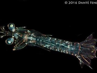 Bioluminescence Cruise: Crazy Baby Eyes: Blog 7