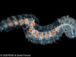Bioluminescence Cruise: Defense in the Deep: Blog 8