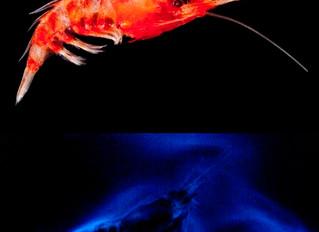 Bioluminescence Cruise: Deep Sea Lights: Blog 6