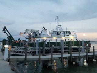 Bioluminescence Cruise - Blog 1