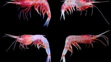 Bioluminescence Cruise: Vertical Migration: Blog 3