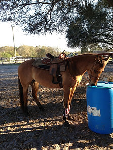 Horseback Riding Lessons are for children age 2 and up