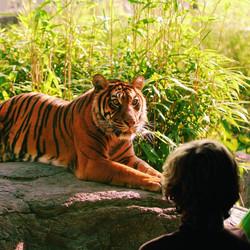 גן החיות בליידורפ ברוטרדם