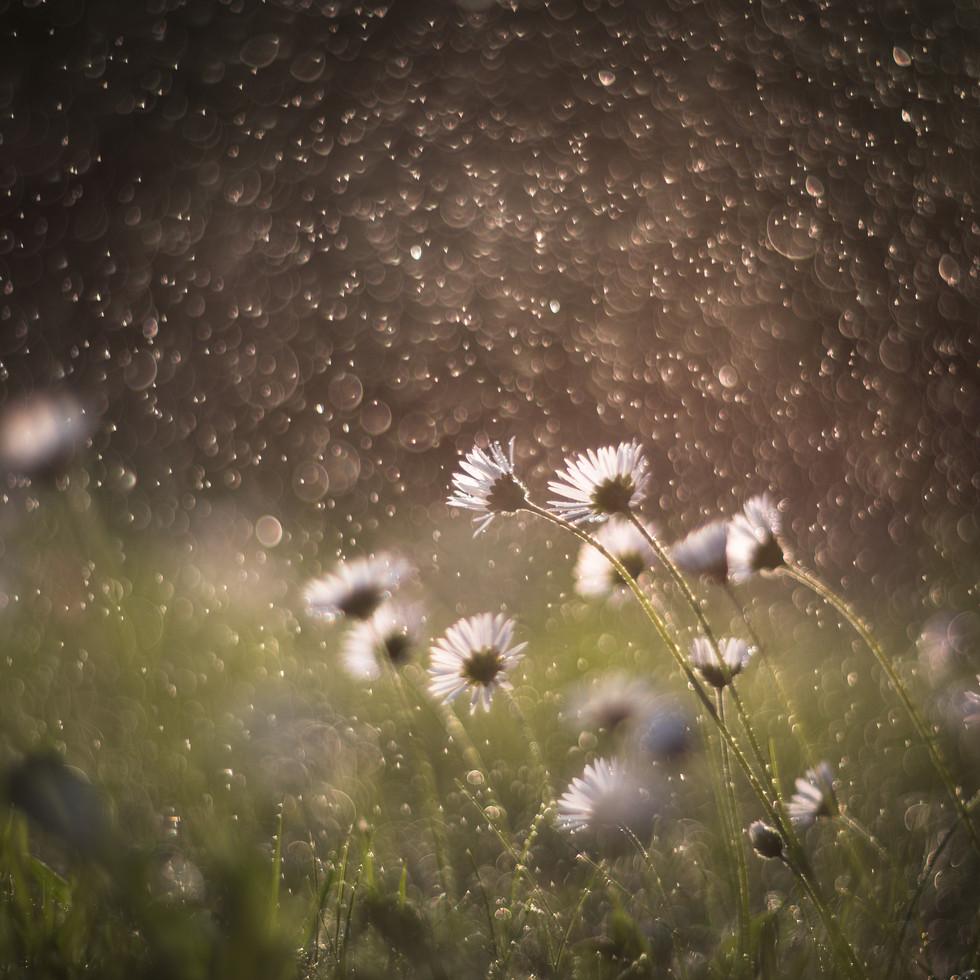 .. když v ráji pršelo