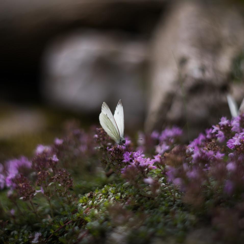 .. schovávaná s motýlem ..