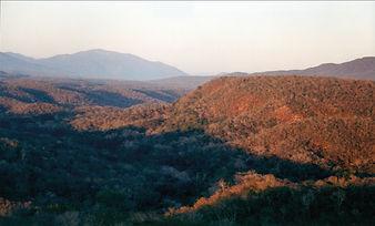 Selva seca.jpg