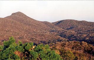 Selva seca5.jpg