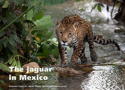 2017 The jaguar in Mexico [digital baja]