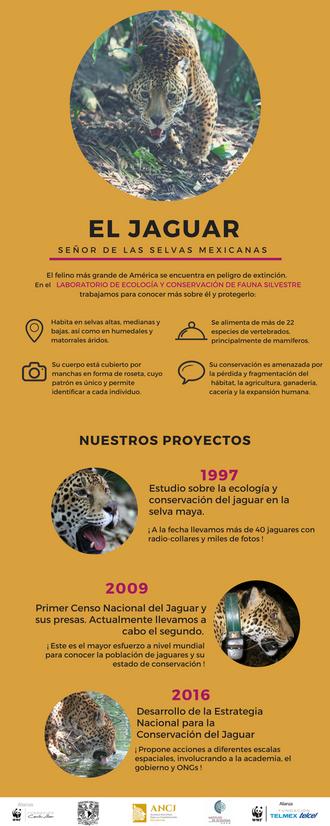 el jaguar_preview.png