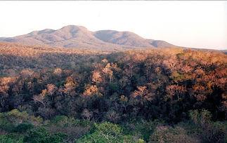 Selva seca2.jpg