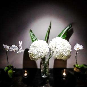 Hortencias & Orquídeas