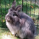 Little Paws Animal Rescue/Smokey