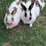 Little Paws Animal Rescue/Uintah&Mocha