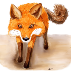 Curious_Fox png.png