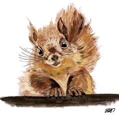 squirrel png.png