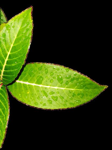 leaves-3232623_960_720_edited_edited_edi