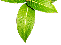 leaves-3232623_960_720.png
