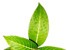 leaves-3232623_960_720_edited_edited.png