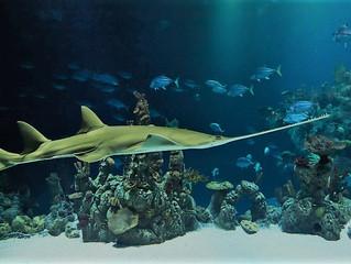 Saw SharkをUPしました。