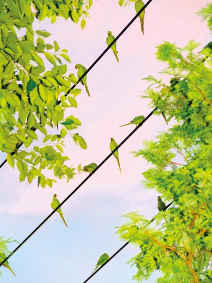 Tokyo Parrots 007, 2013 © Yoshinori Mizutani Courtesy of IMA gallery