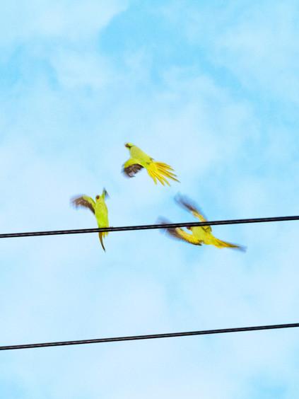 Tokyo Parrots 057, 2013 © Yoshinori Mizutani Courtesy of IMA gallery