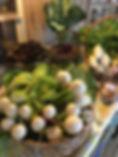 Hakurei Turnips Ours.jpg