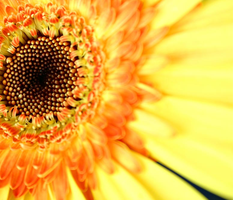 Sunflower%20Close%20Up%20_edited.png
