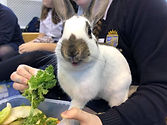 cheeky rabbit.jpg