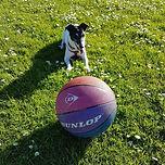 Noahs art animal therapy manchester dog