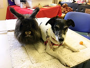 therapy animals manchester