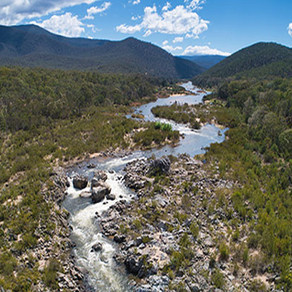 Teachings of the Snowy River and Plant Medicine