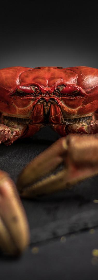Crab Scene